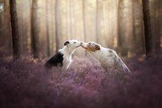 Este Fotógrafo Polonês Tirou As Fotos De Cães Mais Bonitas De To