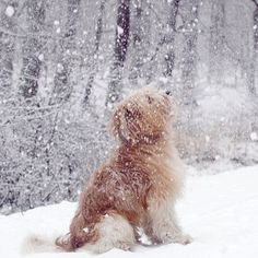 doggie snow day