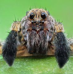 L'univers des insectes est fantastique! Même si elle est répugnante, l'araignée peut sembler charmante!