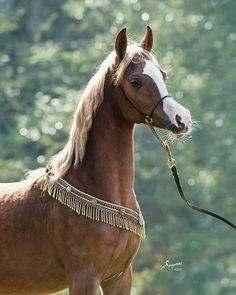Egyptian Arabian Horses, Beautiful Arabian Horses, Most Beautiful Horses, Andalusian Horse, Friesian Horse, Black Horses, Horses And Dogs, Horse Drawings, Clydesdale
