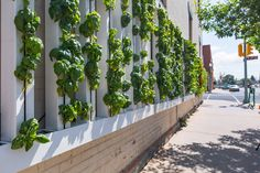 Why Farm Walls?  Because your garden shouldn't be limited by space constraints or bad soils.   Now anyone can grow food anywhere using the same vertical farming technology empowering farms around the world.   The ZipGrow Farm Wall helps anyone who wants to
