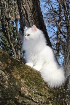 Cats are what we love! Cute Baby Cats, Cute Cats And Kittens, Cute Baby Animals, Cool Cats, Kittens Cutest, Animals And Pets, Cute Dogs, Funny Animals, Pretty Cats