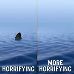 Help save the sharks Funny Animal Memes, Funny Animals, Funny Jokes, Animal Jokes, Baby Animals, Orcas, Save The Sharks, Shark Bait, Haha