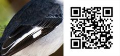 Scan the QR Code to view the correct answer Bird Watching, Coding, Birds, Bird, Programming