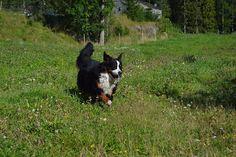 Gårdstunet Hundepensjonat: Full fart på tunet!