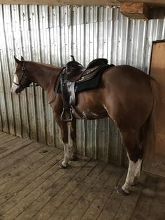 Bit Of A Threat, 2018 APHA Sorrel Overo Filly..