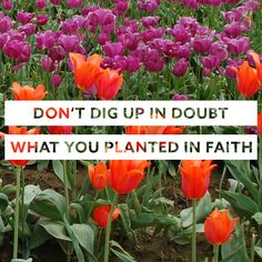 """Don't dig up in doubt what you planted in faith."" - Elisabeth Elliot"
