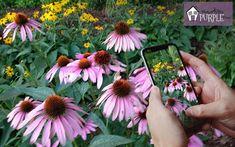 Plant identification apps - ID a plant on the go   Pretty Purple Door Cheap Plants, Unique Plants, Cool Plants, Small Garden Shrubs, Perennial Garden Plans, Identify Plant, Best Perennials, Purple Door, Garden Planner