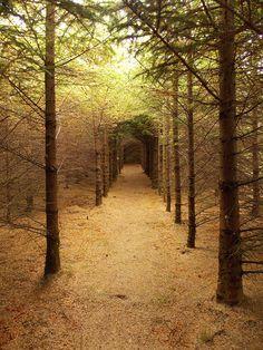 Trees?   Flickr - Photo Sharing!