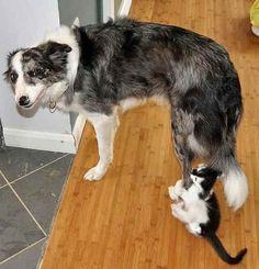 Nom nom i love you doggy!