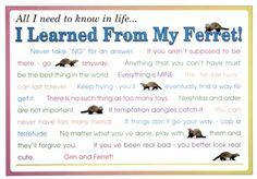Ferret ...I learned