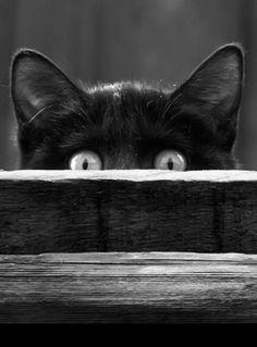 Meow.... Boo!