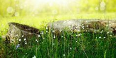 Morgens geht die Sonne auf – Schreibkurs-online Prado, Organic Gardening, Gardening Tips, Image Summer, Purifier, Lawn Care, Green Grass, Green Lawn, Live For Yourself