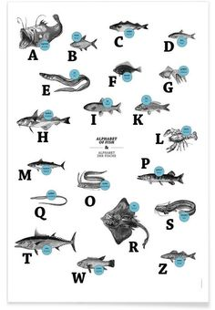 alphabet of fish, animal ABC als Premium Poster | JUNIQE