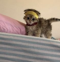 Cute Baby Cats, Cute Little Animals, Cute Funny Animals, Kittens Cutest, Cats And Kittens, Cute Dogs, Gatos Cool, Photo Chat, Cat Aesthetic