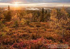 Sunset yesterday, finally sun after few rainy days.   Iivaara, Kuusamo, Finland (21.9.2015)