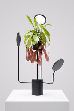 Barcelona-based design studio Goula Figuera created 'Viride' (meaning 'green' in Latin), a set of illuminated planters that combined vegetation with artificial lighting. Luz Natural, Belleza Natural, Deco Design, Lamp Design, Studio Design, Indoor Garden, Indoor Plants, Plante Carnivore, Grow Lamps