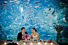 Beautiful aquarium wedding background