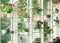 berlin based kokedama terrarium plants plant fern pflanzen biotop. Black Bedroom Furniture Sets. Home Design Ideas