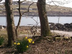 Different bay, still a good view & woodland daffodils.