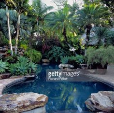 Stock Photo : Swimming pool surrounded by tropical plants, Miami, Florida, USA, Landscape architect Raymond Jungles