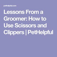Lessons From a Groomer: How to Use Scissors and Clippers   PetHelpful
