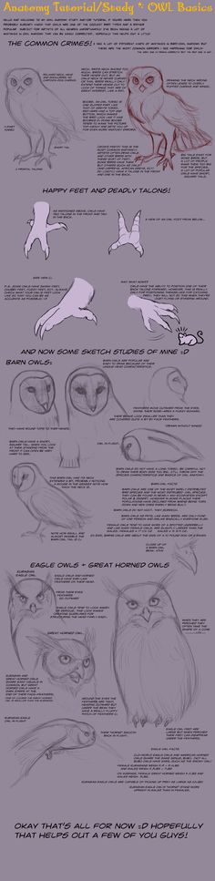 Anatomy Tutorial: Owl Basics by *AddictionHalfWay on deviantART