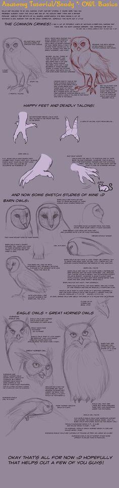 Anatomy Tutorial: Owl Basics by *AddictionHalfWay on deviantART ✤ || CHARACTER DESIGN REFERENCES | 解剖 •  علم التشريح • анатомия • 解剖学 • anatómia • एनाटॉमी • ανατομία • 해부 • Find more at https://www.facebook.com/CharacterDesignReferences & http://www.pinterest.com/characterdesigh if you're looking for: #anatomy #anatomie #anatomia #anatomía #anatomya #anatomija #anatoomia #anatomi #anatomija #animal #creature || ✤