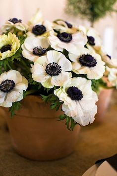 My favorite type of flowers. Black centered anemones.They were supposed to be the focal point of my bouquet when we got married but it arrived with ONE.