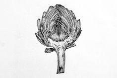 botanical illustration artichoke - Google Search