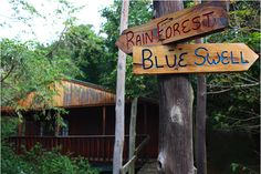 Our cabins are surrounded by nature. Beautiful Creatures, Cabins, Fields, Scenery, Ocean, Sugar, Beach, Nature, Naturaleza