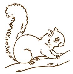 Free Line Art Images  Squirrel Drawings