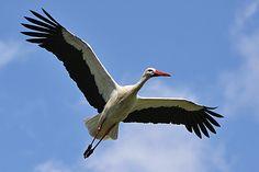 Anzahl der Flügelschläge einiger Flugtiere | Kuriose Tierwelt