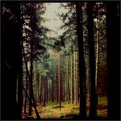 Blaserwald, Schwarzenberg, Austria Old Blood, I Want To Travel, Austria, Wanderlust, Spaces, Pictures, Landscape, Photos, Grimm