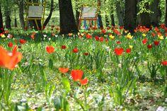Frühling im Stadtpark Schwabach, Germany (Foto: M. Leist)