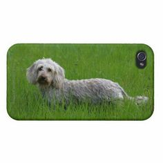 Wire-haired Standard Dachshund in Grass iPhone 4/4S Case   dachshund dapple, miniature dachshunds, miniature dachshund puppies #dachshundsandgnomes #dachshundsofinstragram #dachshundsofinstagra
