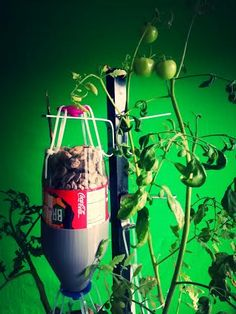 Tomatoes not yet ripe but getting there ;). #3Dprinting #hydroponics #freshfood