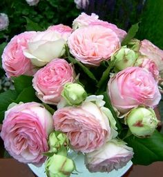 Pierre De Ronsard also known as Eden rose. It belongs to a class of roses known as Romanticas.