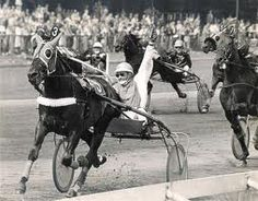 Henri Buitenzorg was a fenomal horse in harness races!
