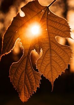 Peace & Love - me-lapislazuli: Golden moment by Robyn Hooz. Autumn Day, Autumn Leaves, Autumn Scenes, Seasons Of The Year, Fall Pictures, Fall Season, Fall Halloween, Nature Photography, Scenery