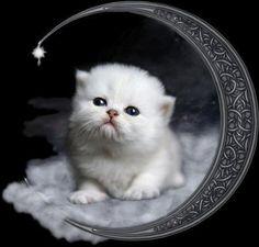 . Decoupage, Picture Search, Cat Gif, Retro, Kitty, Birds, Animals, Doggies, Nova