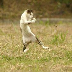 格闘中の猫の画像 プリ画像