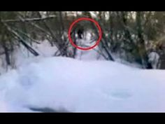 Bigfoot Evidence: New Footage: This Bigfoot Sighting From Washington Looks Legit
