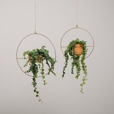 Our Varro Plant Hanger is a hanging planter that can hold a variety of pots. This metal planter comes in two sizes. The round wire frame is a unique way to display your favorite succulent or plant and looks great in any window.