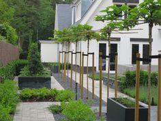 Grote, strakke maar toch speelse, tuin rondom een moderne woning, naar ontwerp van Het Tuinleven
