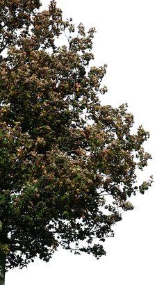 tree 31 png by gd08.deviantart.com on @deviantART