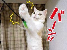 猫にお土産♪|うにオフィシャルブログ「うにの秘密基地」Powered by Ameba