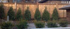 custom western red cedar wood Fence