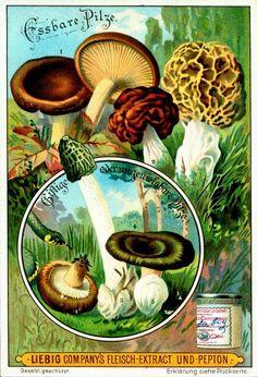 Lovely mushrooms.