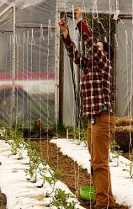 Ineffable Secrets to Growing Tomatoes in Containers Ideas. Remarkable Secrets to Growing Tomatoes in Containers Ideas. Tomato Trellis, Diy Trellis, Tomato Cages, Tomato Garden, Garden Trellis, Tomato Support, Pruning Tomato Plants, Growing Tomatoes In Containers, Grow Tomatoes